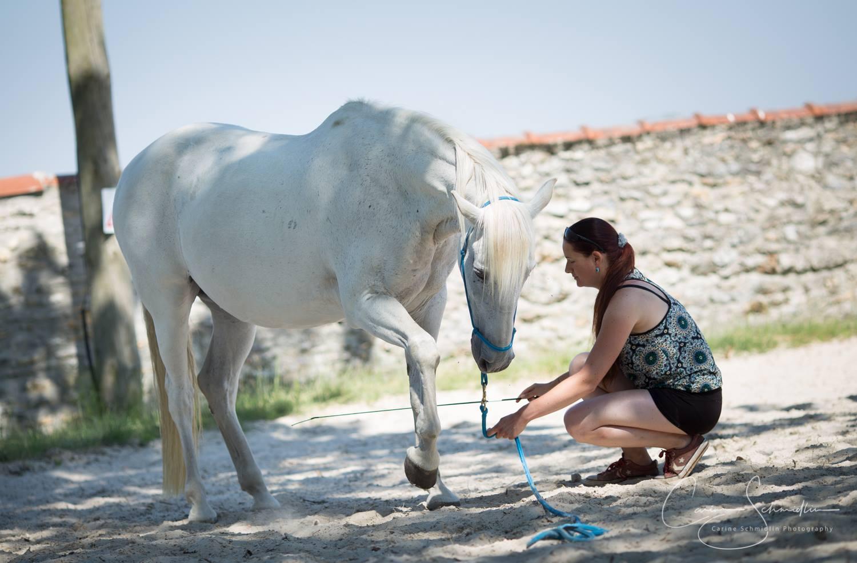 Vous rencontrez un problème avec votre cheval ?