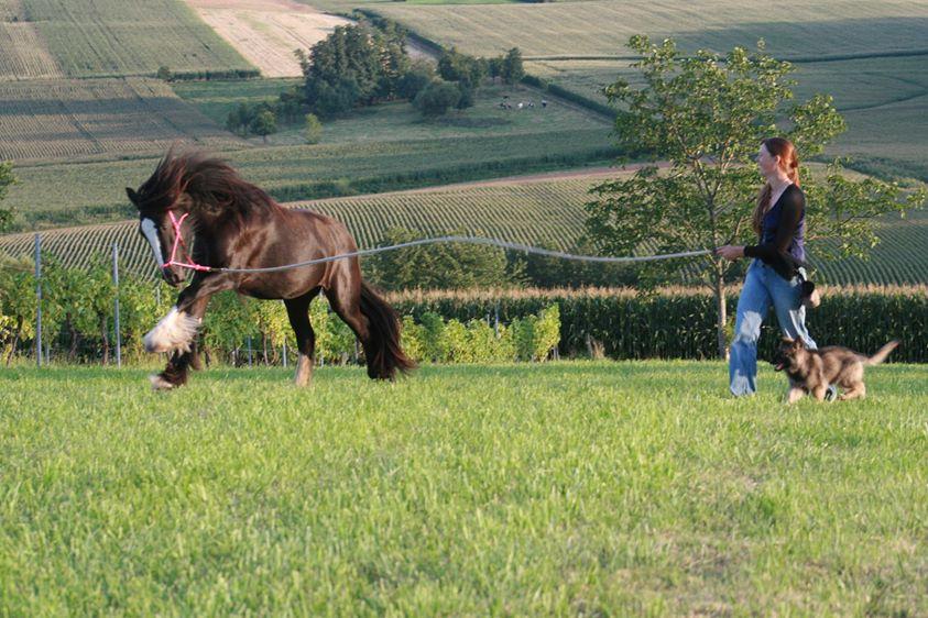 Calmer mon cheval