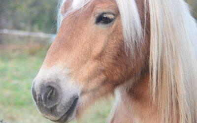 Idées pour améliorer la relation avec son cheval
